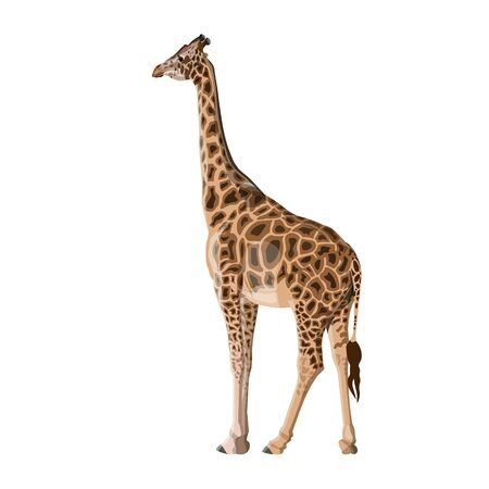 Giraffe isolated on white background. Vector illustration Ilustrace
