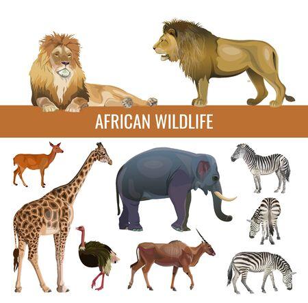 Fauna africana: leones, cebras, antílopes, elefantes, jirafas y avestruces. Ilustración de vector aislado sobre fondo blanco.