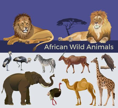 African wild animals: lions, zebra, antelope eland, elephant, giraffe, camel, eagle, crowned cranes and ostrich. Vector illustration isolated on white and blue background Ilustrace