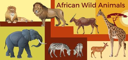 African wild animals: lions, elephant, zebras, giraffe and antelopes. Vector illustration in realistic style