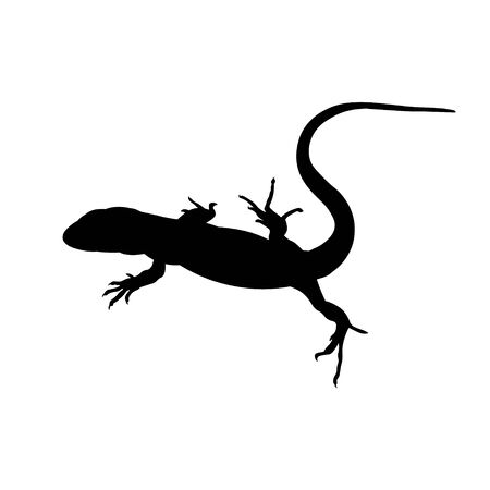 Silhouette of lizard. Vector illustration isolated on white background Ilustrace