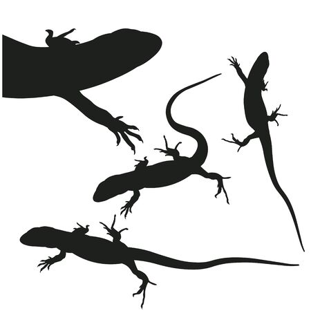 Set of lizards silhouettes in various poses. Vector illustration isolated on white background Illustration