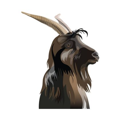 Portrait of the goat head in profile. Vector illustration isolated on white background
