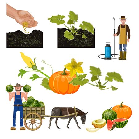 Growing pumpkin infographic. Set of cultivation of cucurbitaceae plants. Vector illustration isolated on white background