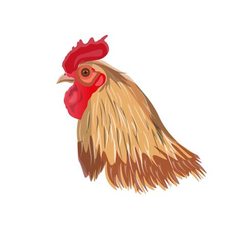 Rooster head image. Vector illustration isolated on white background