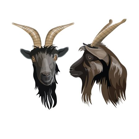 Goat head portrait front and side. Vector illustration isolated on white background Ilustrace