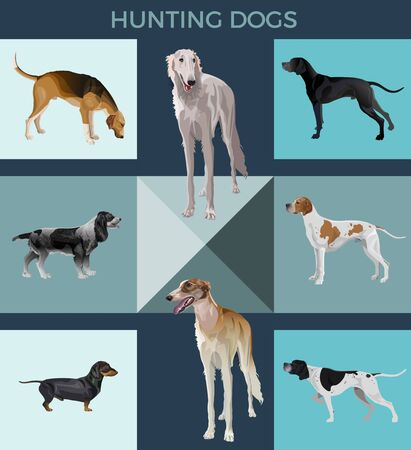 Vector set of hunting dogs. Greyhound, pointer, scent hound, spaniel and dachshund. Illustration