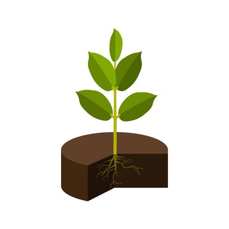 Young plant in a ground. Green 3d icon. Sprout growth. Vector illustration isolated on white background