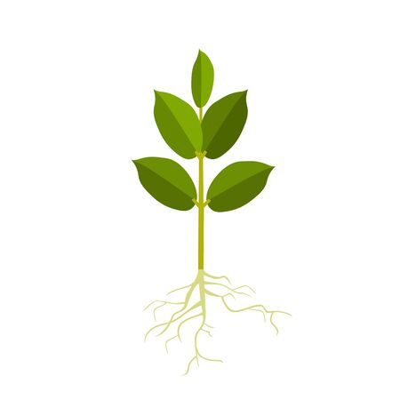 Young plant with roots. Vector illustration isolated on white background Ilustrace