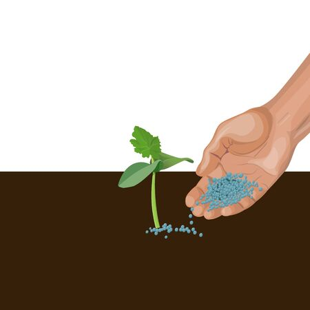 Hand giving mineral fertilizer to young plant. Vector illustration isolated on white background Ilustrace