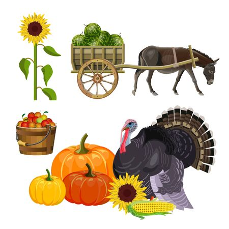 Harvest set. Donkey pulling a cart with watermelons. Autumn rural still life with turkey, pumpkins, apples in a bucket and sunflower. Vector illustration isolated on white background