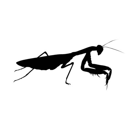 Silhouette of praying mantis. Predatory insect. Vector illustration isolated on white background