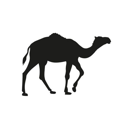 Silhouette of dromedary, one-humped camel. Pack animal. Vector illustration isolated on white background