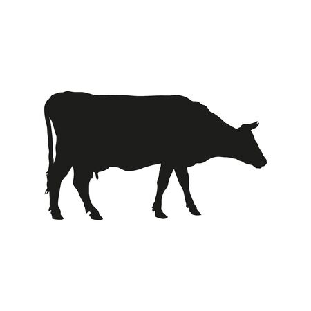 Black silhouette of a grazing cow. Side view. Vector illustration isolated on white background 矢量图像
