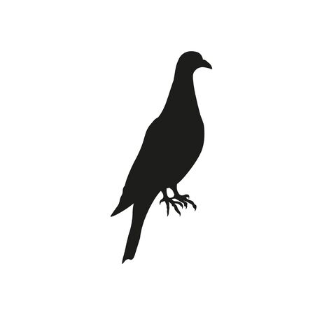 Silhouette of post pigeon. Carrier, homer, dove. Vector illustration isolated on white background
