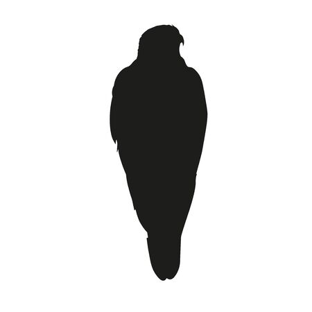 Silhouette of sitting falcon. Vector illustration isolated on the white background.