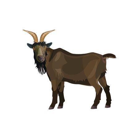 Brown goat male standing. Side view. Vector illustration isolated on white background