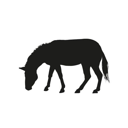 Black silhouette of a grazing zebra. Vector illustration isolated on the white background
