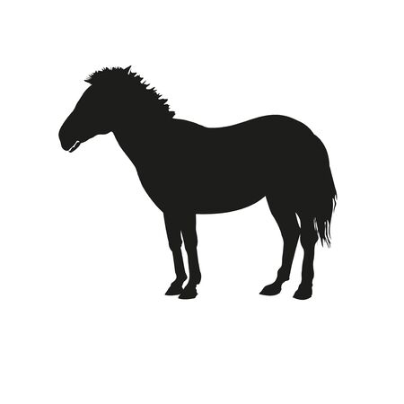 Black silhouette of a standing zebra. Vector illustration isolated on the white background