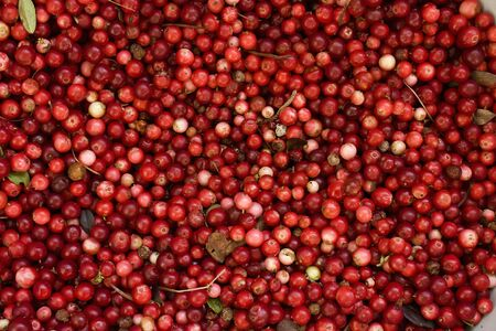 lots of frozen red bilberries for background Stock Photo