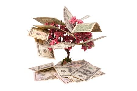 Money tree isolated on white background Фото со стока