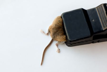 trapped: Trapped Mouse Close-up