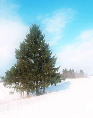 Fir in winter landscape, dream tone Stock Photo