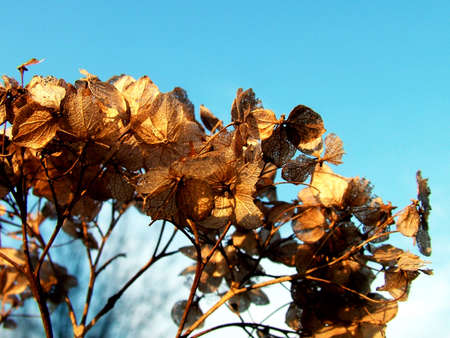 Withered leaf in sky