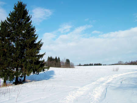 Fir and winter road in field