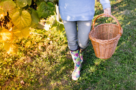 waist down: Close up of woman waist down with basket in vineyard