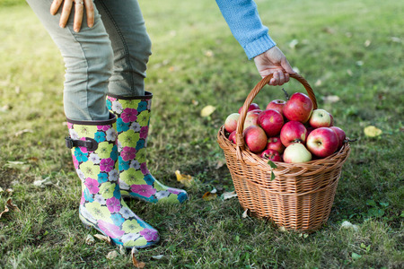 waist down: Close up of woman waist down picking up basket full of apples
