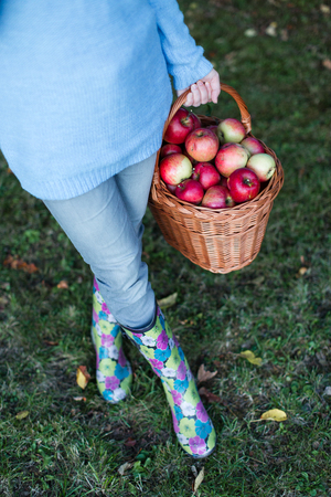 waist down: Close up of woman waist down carrying basket full of apples