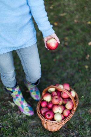 waist down: Close up of woman waist down putting apple into basket