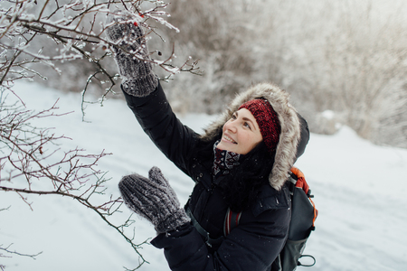 Happy female tourist trekking and admiring rose hips covered in snow Фото со стока