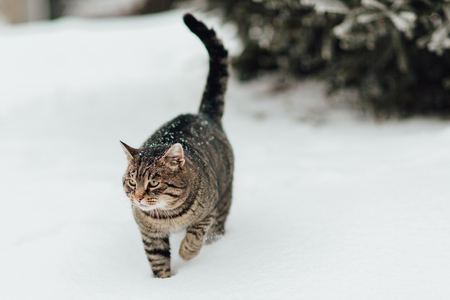 Portrait of a kitten making her way through the deep snow