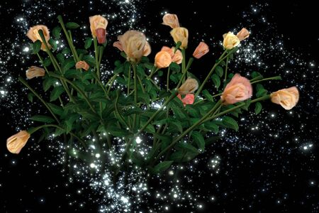 mysterious: Mysterious rose in the night sky a distant galaxy