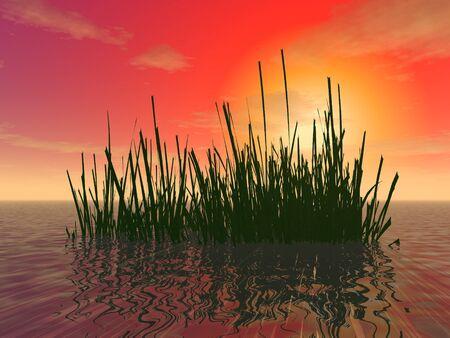 """3d 그림 : """"석양의 배경 바다의 얕은 바다에서 조류의 덤 불"""""""