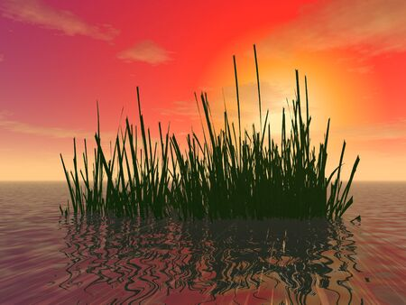 3d illustration: A thicket of algae in the shallow waters of the ocean against a background of sunset Stock fotó