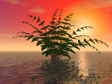 3d illustration: A mysterious shrub on the ocean surface against the background of a sunset