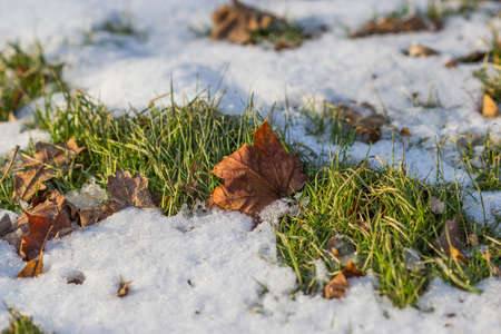 climatology: Fall leaf on snow