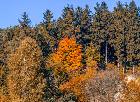 exception: Autumn in the forest, with the exception of coniferous trees