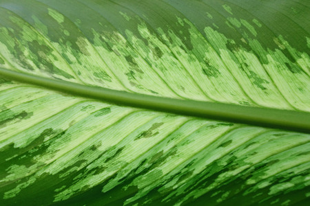 Leaf abstract green natural background.