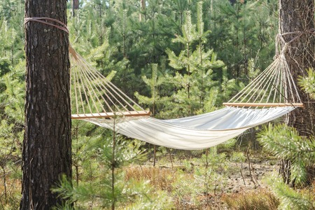 fabric hammock strung between two pines in forest Archivio Fotografico