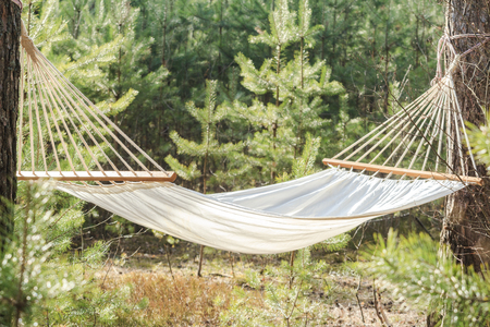 fabric hammock strung between two trees in pine forest Archivio Fotografico