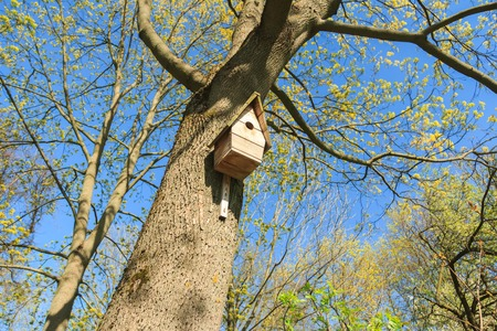 Birdhouse on tree in springtime green grove photo