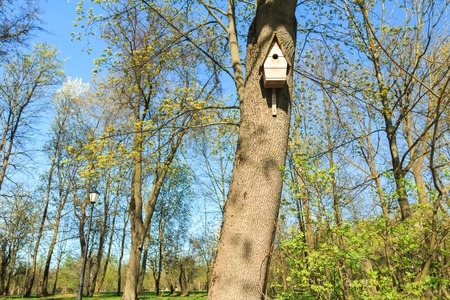 Birdhouse on tree in early spring green grove photo