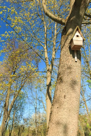 Tree with birdhouse in springtime green grove photo