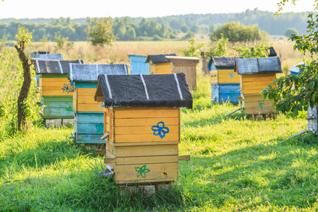 Summer apiary with several bee hives in farm garden