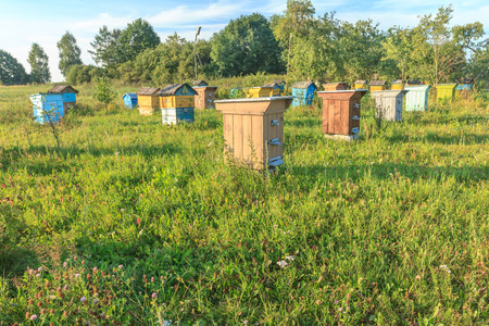apiary: A farm apiary with multicolor wooden beehouses