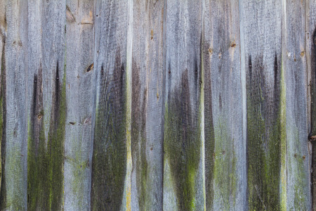 planking: Old wooden planking wall covered with a green moss
